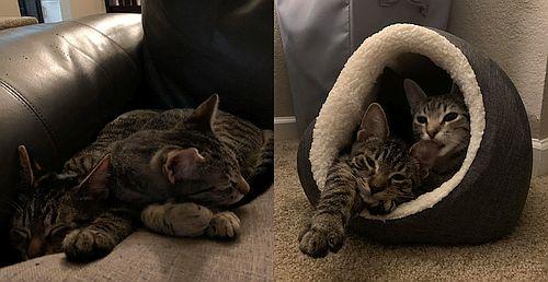 Matilda and Yogi